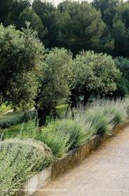 olive0129.jpg