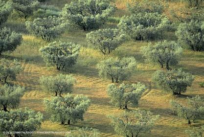 Provence - Landscapes  - La Farre les Oliviers -