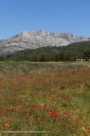 09 06 2012 - Pays d'Aix en Provence (FRA,13) - Sainte Victoire mountain