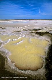 Salt-water marsh