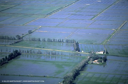 Rhône river, Rice fields in Camargue