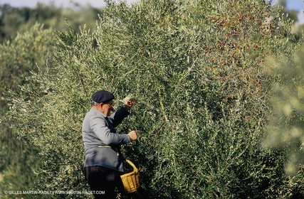 olive0114.jpg