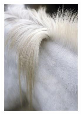 Crin Blanc 2