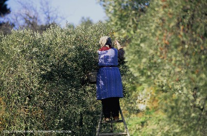 olive0127.jpg