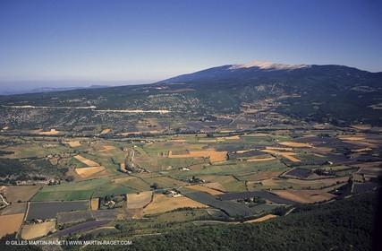lavander fields , 2005, plateau de sault