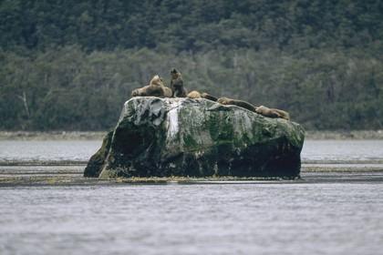 Cruising destination, Patagonia (Chile)
