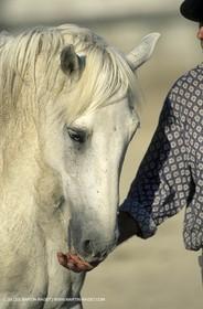 Camargue Horse and gardians
