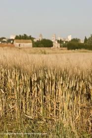 27 03 08-Arles- (FRA,13) - Van Gogh Landscapes