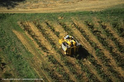 Provence, Harvest time