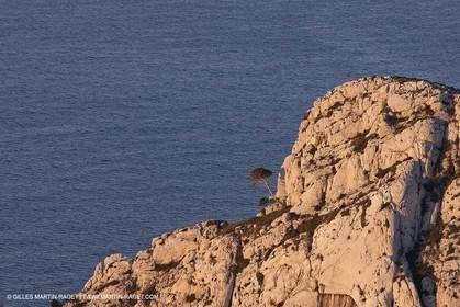 04 04 2009 - Marseille (FRA, 13) - Les Calanques - Crête de Riou