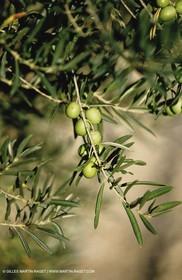 olive0115.jpg