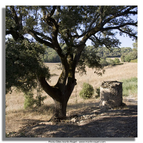 31 08 2007 - surrounds of Forcalquier (FRA, 04) - surrounds of Lurs