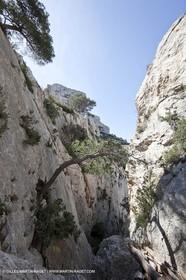 18 04 2009 - Marseille (FRA, 13) - Les Calanques - Vallon St Michel - Le pas des Géants