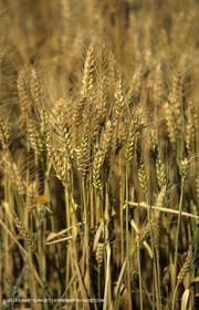 Provence - general farming