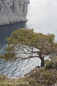 20 03 2009 - Marseille (FRA, 13) - Les Calanques - Calanque de l'Oule