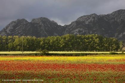 29 04 2012 ( Saint Rémy de Provence (FRA, 13) - Chaîne des Alpilles vers Romanin