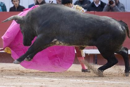25 03 2008 - Arles (FRA, 13) - Feria 2008 - Bullfight with Miura toros