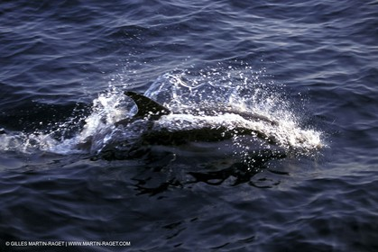 Marine animals
