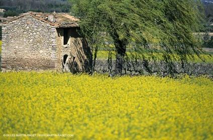 Alpilles (FRA,13), Rape fields