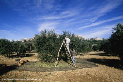 olive0125.jpg