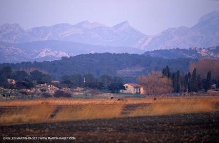 Alpilles near Maussane