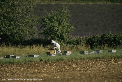 France, Provence, Apiculture