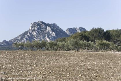 09 02 2008 - Les Baux de Provence (FRA, 13) - Alpilles hills landscapes