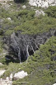 20 05 2009 - Marseille (FRA, 13) - Les Calanques - Calanque des Cairons