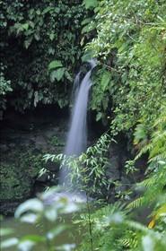 Dominica - Caribbean