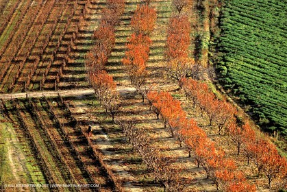 Autumn fruit tree fields