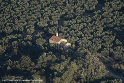 France, Provence, Alpilles, AOC Vallée des Baux, olive trees fields, olive oil production