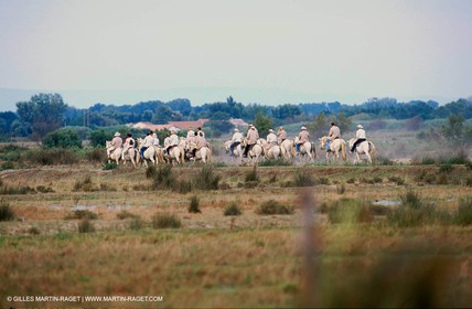 Camargue horses and bulls breeding