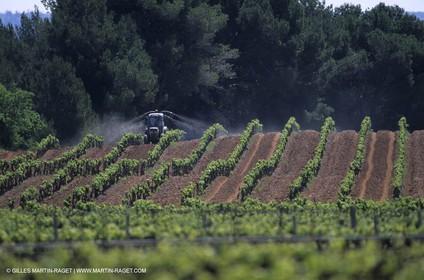 Aix Vineyard