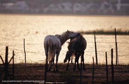 2000-2010- Arles - Les Saintes Maries de la mer (FRA,13) - Camargue horses