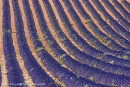 27 06 2011 - Puimichel (FRA, 04) - Lavander fields