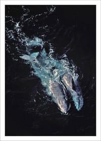 Whale couple
