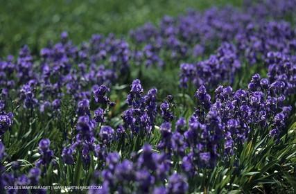 Around Aix en Provence - Wild flowers