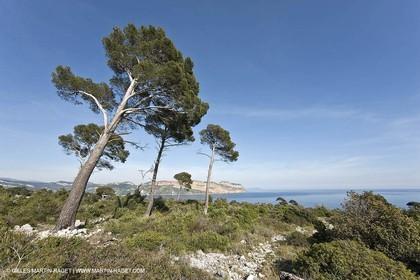 06 05 2009 - Marseille (FRA, 13) - Les Calanques - On Castelviel plateau