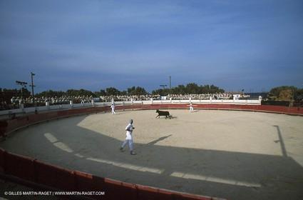Camargue Bull game