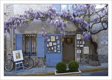 .GLYCINES EN FLEUR - SAINT REMY DE PROVENCE..Product: in house made quality print on 8 ultrachome colors Epson ink Jet printer...Available sizes: .. 20x30 cm.. 30x40 cm.. 50x70 cm.. 80x120 cm..Available papers: .. Standard 250 gr glossy paper print, black streak, white margin, no signature.. Top quality glossy 290 gr. paper, black streak, white margin, checked and signed by the author.. Fine Art print (signed, numbered, stamped, registered) on demand.. Other supports (Canvas, Acrylic, Metal) on demand..Packaging: cylindric reinforced tube..Shipping options: regular mail or Shipping company..Click on the basket icon to select your options and start the online ordering process