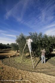 olive0124.jpg