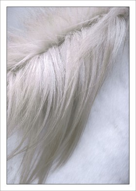 Crin Blanc 1