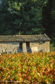 Provence, Harvest time