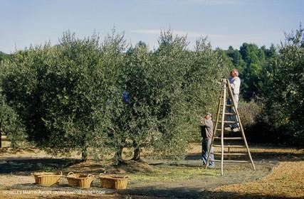 olive0113.jpg
