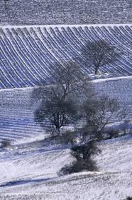 Provence under snow