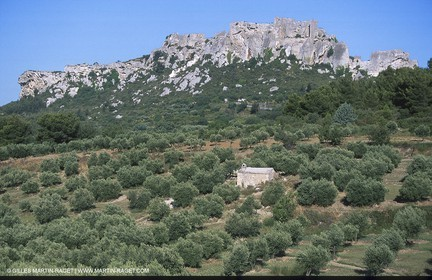 Baux de Provence valley olive tree fields