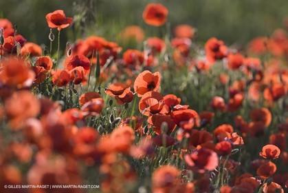 04 05 2008 - Saint Rémy de Provence (FRA, 13) - Alpilles hills landscapes