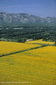 Alpilles countryside