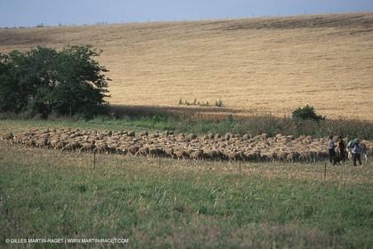 Saint Rémy de Provence (FRA,13) - Sheep stocks migration Fest