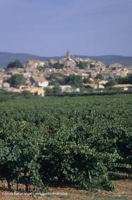 France, Provence, Pays d'Aix en Provence, Pourrières